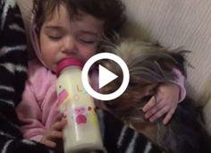 A kislány annyira szereti a kutyáját, hogy még álmában is öleli, így a legjobb aludni Tips