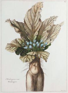 Flora Illustrata: A Celebration of Botanical Masterworks | Events | The New York Review of Books