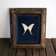 Vintage Real Large Butterfly Moth White Moth Framed Taxidermy #etsy