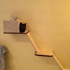 Kanel dans sa nouvelle petite niche......