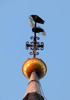 Krähe auf der goldenen Kirchturmspitze, Hackenbroich - Foto: S. Hopp
