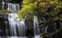Download wallpapers PBeautiful waterfall, green tree, lake, forest, urakanui Falls, New Zealand, Otago, Tarara