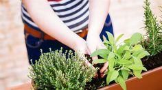 Cómo cuidar tus plantas para que lleguen bien a la primavera  ¿Cuándo es el mejor momento para podar y para plantar?. Foto: Shutterstock