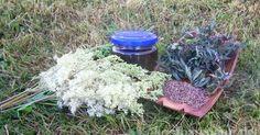 Empfehlung: Wildkräuter-Tinktur als natürliches Mittel gegen Kopfschmerzen