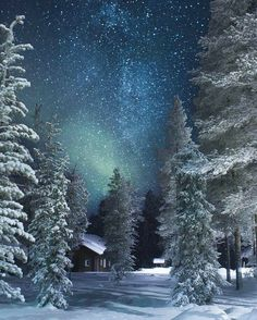 Winter scene with starry night.