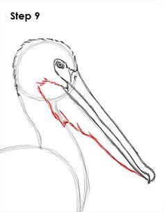Pelican Drawing 9