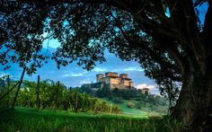 Name: Vineyard and castle; Size: 2560 x Category: Other. Beautiful World, Beautiful Places, Tourist Center, Castle House, Exotic Places, Romanesque, Nature Wallpaper, Science And Nature, Colorful Pictures