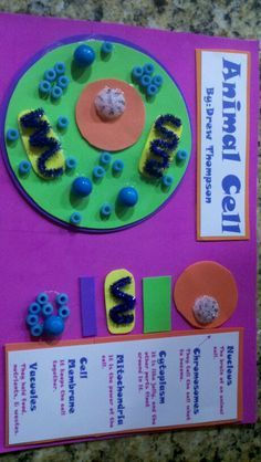 Animal Cell Project on Pinterest