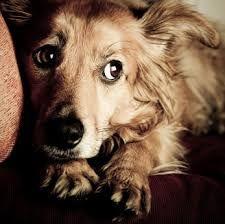 Prendeva a calci un cucciolo, condanna a tre mesi in primo grado :http://www.qualazampa.news/2018/01/15/prendeva-a-calci-un-cucciolo-condanna-a-tre-mesi-in-primo-grado/