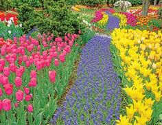 Trail of Blooms, a 500-piece jigsaw puzzle by Springbok Puzzles.