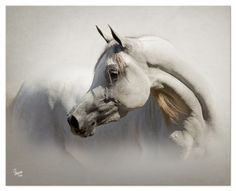EQUINE PHOTOGRAPHY by SUZANNE, Inc.