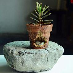 Mice Sleeping In A Miniature Flower Pot