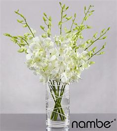 Wholesale Flowers Orlando