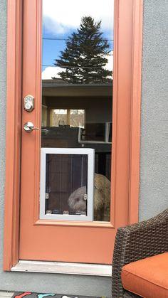 Need dog doors for glass doors in denver call dog door guy of the best sliding glass door dog doors in denver and raleigh planetlyrics Choice Image