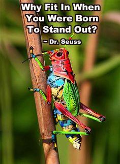 Dr Seus