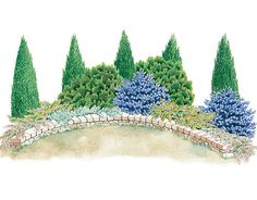 Evergreen screen garden  Plant a screen of evergreens to hide eyesores, enhance your property and provide privacy year-round.