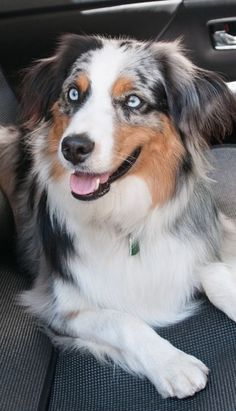 Reminds me of Dusty, our very first Aussie; and of Rocky, our last blue merle. Aussie Puppies, Baby Puppies, Dogs And Puppies, Doggies, Cute Baby Dogs, I Love Dogs, Animal Original, Animals And Pets, Cute Animals