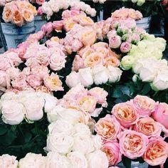 Beautiful blooms via @christie_nicole #bellamummablooms #rose