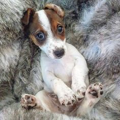 Reminds me of my mom's JRT, Jamie.