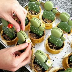 Have any green macarons on hand? Try out these adorable cacti macaron tarts by… Cute Food, Yummy Food, Yummy Yummy, Just Desserts, Dessert Recipes, Green Desserts, Macaroon Recipes, Drink Recipes, Dinner Recipes