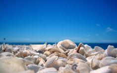 8798635-beach-seashells-pictures