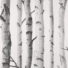 Birch Trees Wallpape