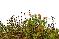 Wild Flowers 3 Stock Photo- 0082-PNG by annamae22.deviantart.com on @deviantART