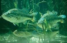 Three Simple Steps for Finding Bass In Unfamiliar Water