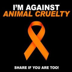 Go Vegan. Educate yourself regarding companies the do Animal Testing.  Do not purchase Tickets to Events that include any animal acts.  Do not purchase a dog or cat from a Breeder or pet store. Do not support Dog or Horse Racing.  *Please know that Animal Cruelty has many faces