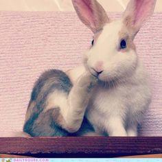 cute animals - Reader Squee: Nom nom feets