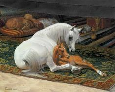 The Arabian horse has captivated mankind for centuries with its beauty ...