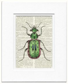 Beetle II - a magnificient ground beetle printed on page from vintage book via Etsy