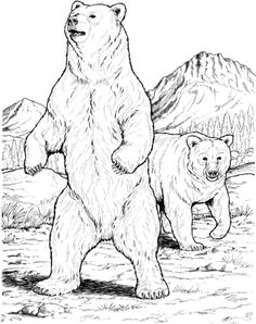 Click to see printable version of Two Black Bears Coloring page