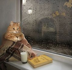 """Kitty-Cat: """"Well... All I need now, is to learn how to read!"""" (Captioned By: David Charles.)"""