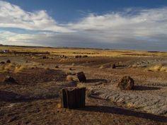 Geology Rocks! Petrified rocks in Arizona