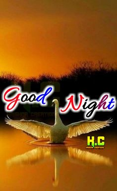 Good Morning Msg, Marco Antonio, Good Night Blessings, Sweet Night, Good Night Quotes, Hd Images, Blessed, Sleep, Neon Signs