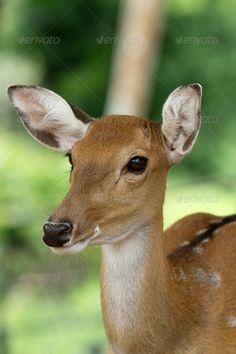 deer ... Head Shot, animal, closeup, deer, doe, fauna, mammal, nature, outdoors, whitetail, wild, wildlife, woods