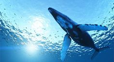Un gioco chiamato Blue Whale è diventato noto nelle ultime settimane perché si pensa possa essere stato la causa di molti suicidi da parte dei giovani