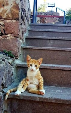 Many guests book the Sunrise Resort in Eftalou on Lesvos island (Greece) to see the many cats and kittens. Click through to read more http://www.traveling-cats.com/2016/07/cats-from-eftalou-lesbos.html