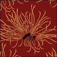 The Calliandra stencil - price $111.77