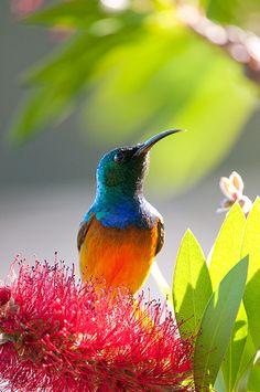 #Humming #Birds