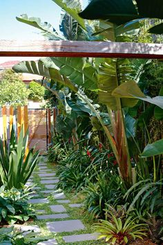 "cool garden gate. quote: ""concrete pavers from Eco Outdoor in a sea of dichondra ... slender weaver bamboo and Strelitzia nicolai (bird of paradise) offer privacy within a garden bed that is only 1.5 metres wide. At ground level, bromeliads offer year-round colour, augmented by seasonal colour splashes from Heliconia 'Christmas Cheer' and Brazilian walking iris."""