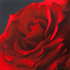 Print of a red rose from oil painting by Vincent Keeling