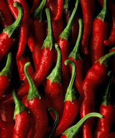 red hot pepper / pimeta vermelha ardida