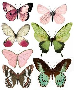 Forums / Images & Graphics / Butterflies - Swirlydoos Monthly Scrapbook Kit Club ideal for butterfly shapes for tatto'd thigh Art Papillon, Butterfly Art, Green Butterfly, Butterfly Pattern, Butterfly Images, Butterfly Painting, Paper Butterflies, Vintage Butterfly Tattoo, Watercolour Butterfly