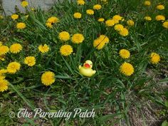 The Duck and the Dandelions: The Rubber Ducky Project Week 19 | The Parenting Patch