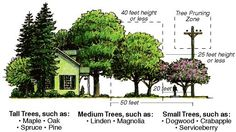 Selecting the Right Tree for the Location