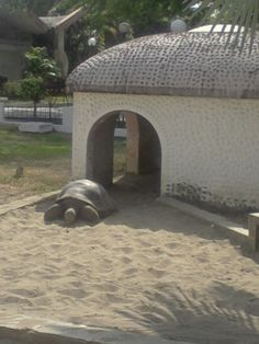 Une tortue Luth à Guayaquil