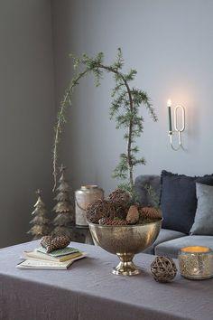 Sedertre har en fantastisk form, og er en av de mest populære plantene til jul.