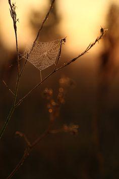 From the blog … When dreams change ... destinationherean... #sunrise #bathurst #web #spiderweb